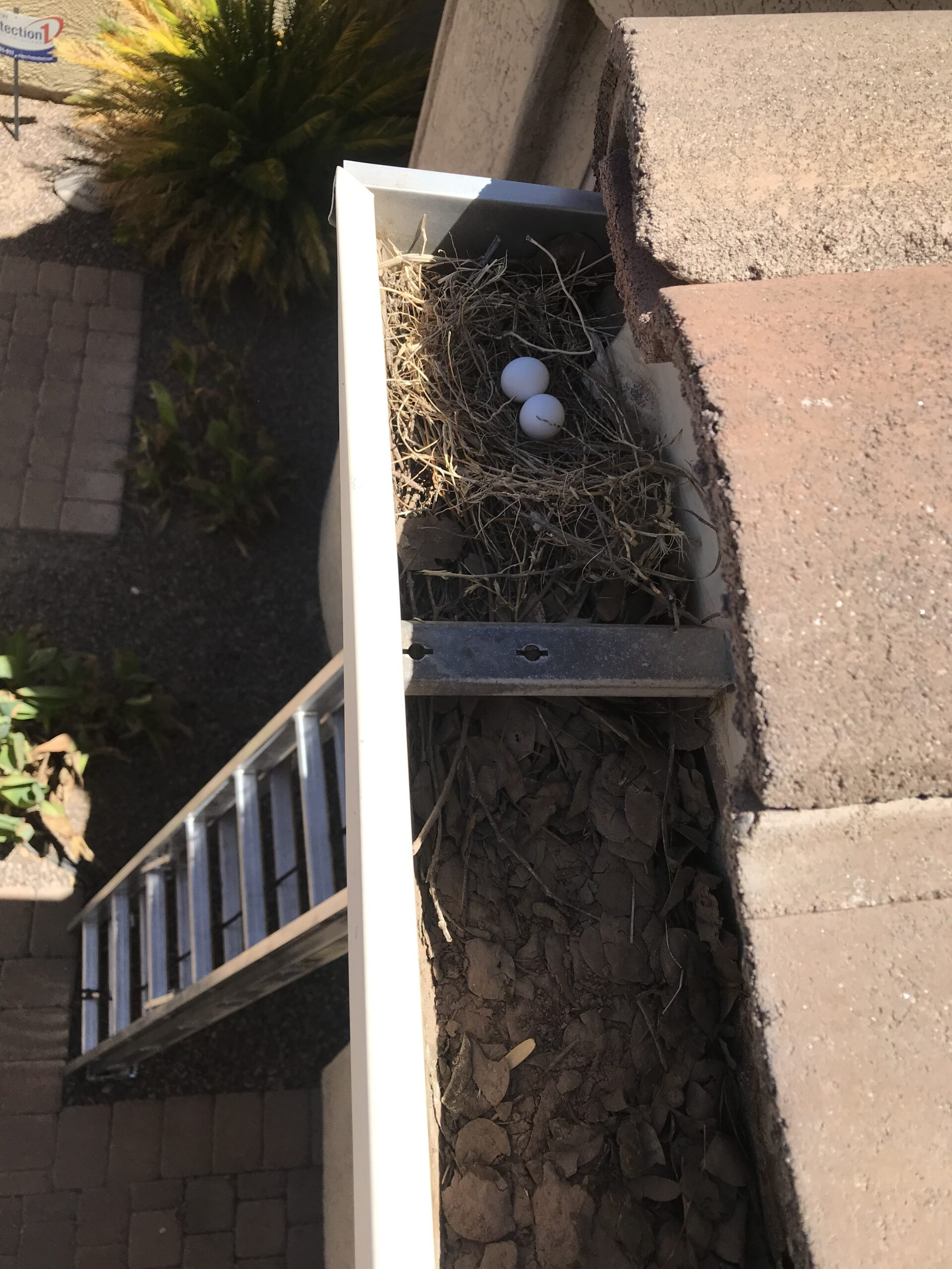 Birds Nest in Gutters